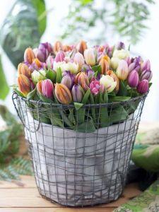 tulipanes cesto