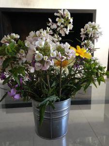 flores campo Carmela 1