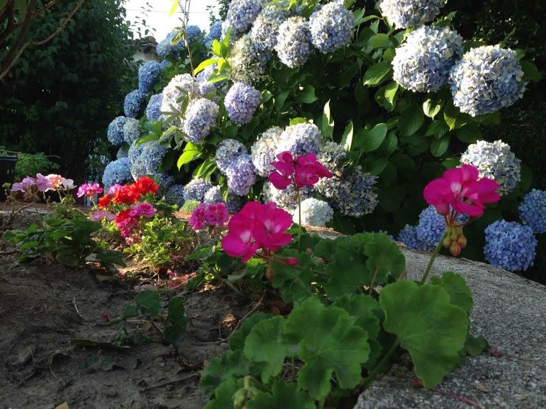 Algo m s que hortensias creciendoentreflores - Decoracion con hortensias ...