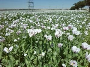 Otras flores (1)