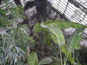 botánico invernadero
