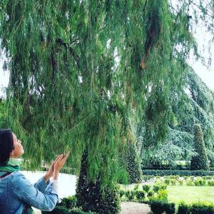 árbol retiro