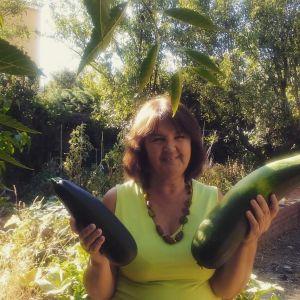 calabacines cosecha