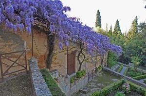 glicinia-alhambra