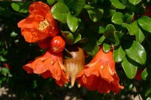 granado flores