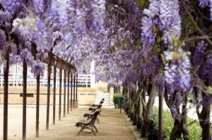 Parque la Vega en flor Toledo002