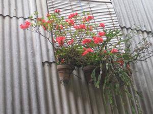 balcón paqui