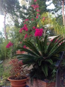 jardín felipe 1