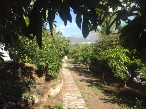 jardín Felipe 4