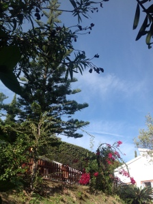 jardín Felipe 5