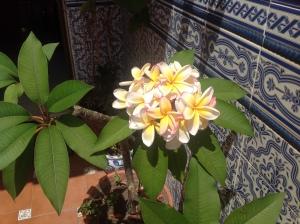 jardín Felipe 7