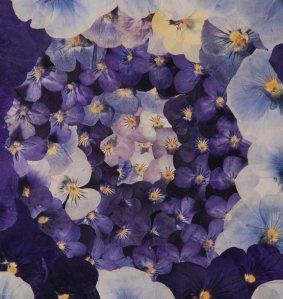 mijoart viola azul