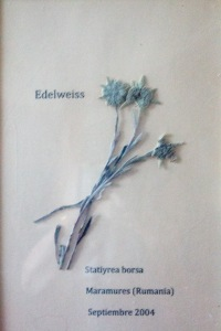 susana edelweis