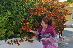 vejer hibisco y lantana