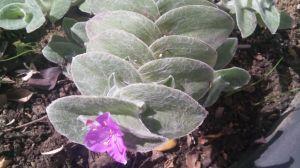 vejer planta singular