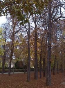 Alameda del Parral 25 oct 2015 (12)