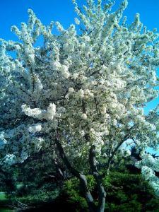 ana primavera 1