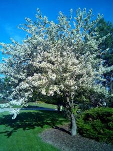 ana primavera 3