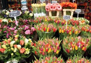 calle flores Holanda
