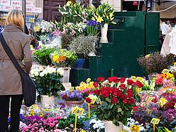 calle flores italia campo di fiori
