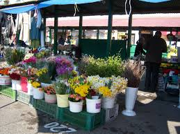 calle flores polonia