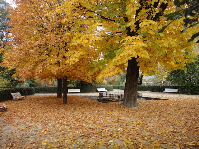 castaños otoño botánico