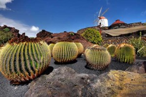 Flora-y-Fauna-de-Lanzarote