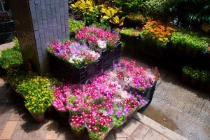 flores calle honkong