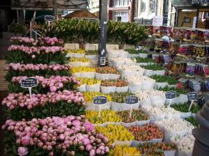 flores calle nuevas 3