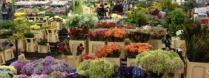flores calle nuevas 4