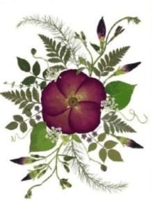 flores secas tarjetas 1