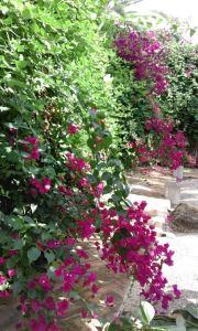 jardín mercedes 10