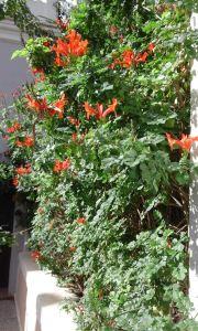 jardín mercedes 11