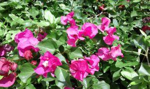 jardín mercedes 9