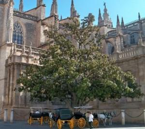 magnolio-de-la-catedral