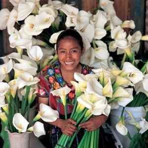 mercado flores calas guate