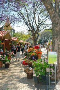 mercado flores madeira