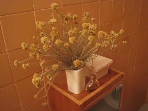 Plantas secas (2)