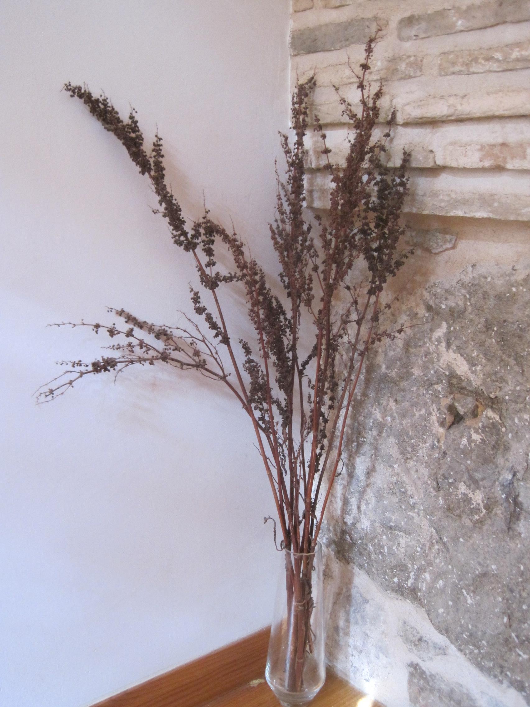 Flor seca prensada xiv siemprevivas flores sencillas que nos acompa an siempre - Plantas secas decoracion ...