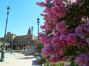 rosas en plaza españa sevilla