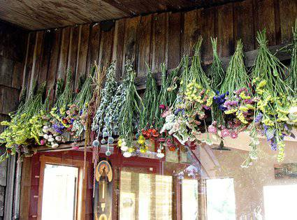 Flor Seca Prensada Xiv Siemprevivas Flores Sencillas Que Nos