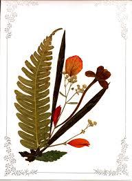 tarjeta flor seca 3