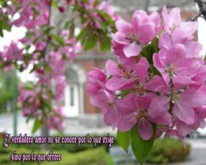 tarjetas flores