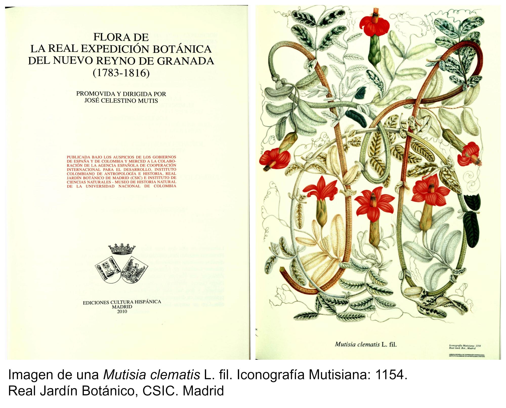 Real expedici pn bot nica de la nueva espa a for Libros de botanica pdf