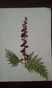 album flores berberi y tuya