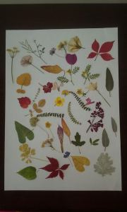 álbum flores miniaturas
