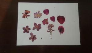 álbum flores varias