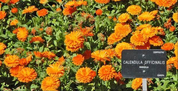 Flores de invierno creciendoentreflores - Plantas de invierno ...