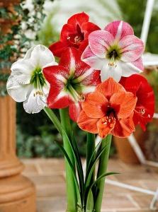 deco flor amarilis