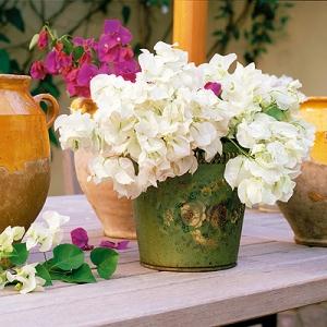 deco flor boganviñlla blanca
